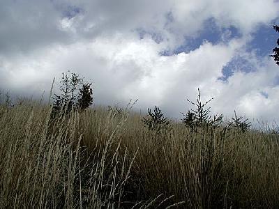 Photo Forest 17 Landscape