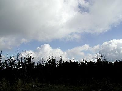 Photo Forest 2 Landscape
