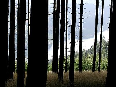 Photo Forest 22 Landscape