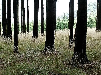 Photo Forest 25 Landscape