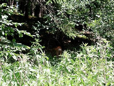 Photo Forest 78 Landscape
