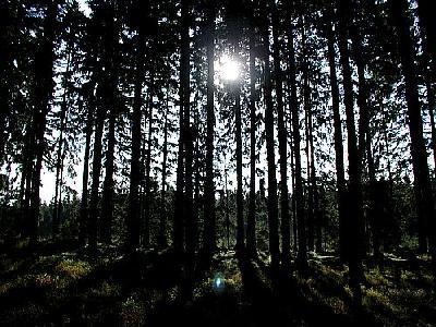 Photo Forest 84 Landscape