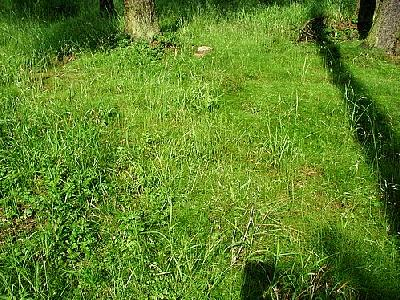Photo Grass 4 Landscape