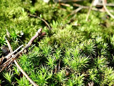 Photo Moss Landscape