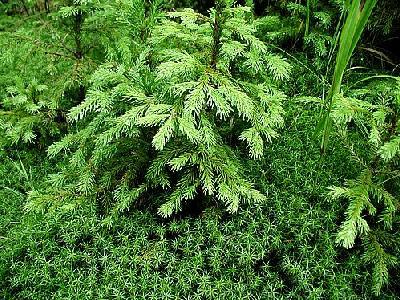 Photo Moss 7 Landscape