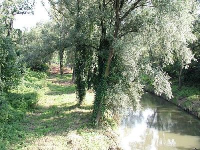 Photo River 6 Landscape