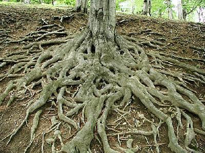 Photo Roots 4 Landscape
