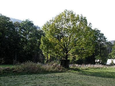 Photo Tree 2 Landscape