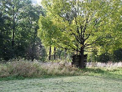 Photo Tree 3 Landscape