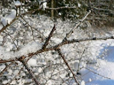 Photo Frost On Tree Twig Landscape