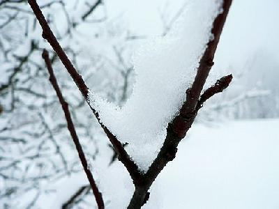 Photo Snowy Branch 2 Landscape