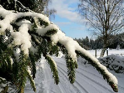 Photo Snowy Spruce Branch Landscape