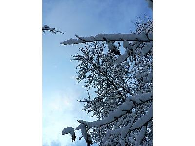 Photo Snowy Tree Landscape
