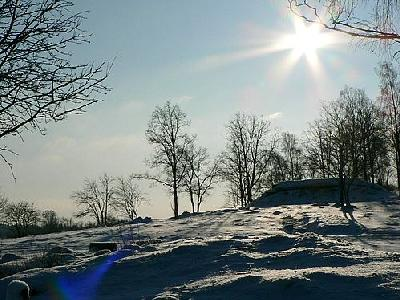 Photo Sunshine On Snowy Tree Hill Landscape