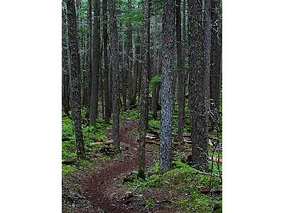 Photo Forest Trail Landscape