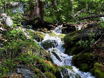 Photo Sequoia 6 Landscape