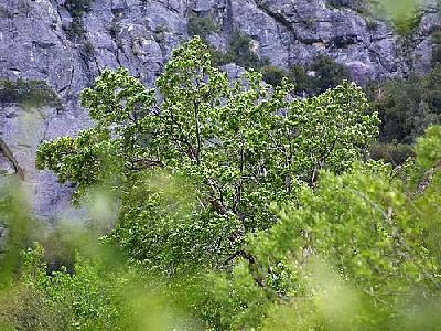 Photo Tree Landscape