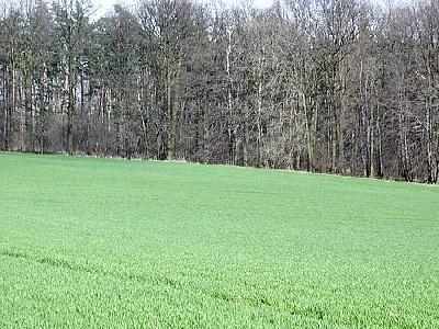 Photo Field 35 Landscape