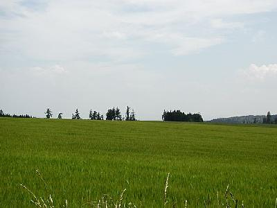 Photo Field 46 Landscape