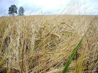Photo Rye Landscape