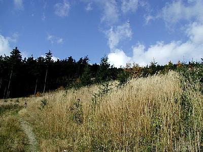 Photo Forest 10 Landscape