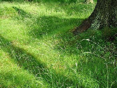 Photo Grass 8 Landscape