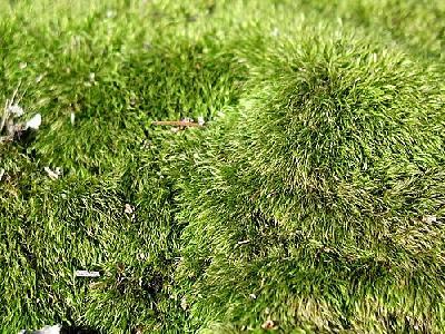 Photo Moss 2 Landscape