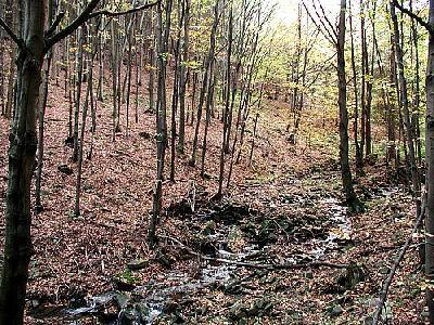 Photo Forest 30 Landscape
