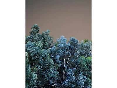 Photo Wood Trees Landscape