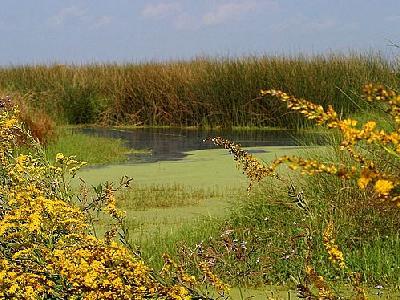 Photo Swamp 3 Landscape