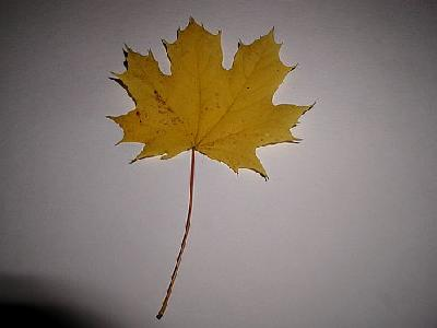 Photo Leaf Object
