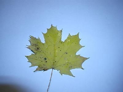 Photo Leaf 4 Object
