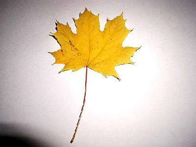 Photo Leaf 5 Object