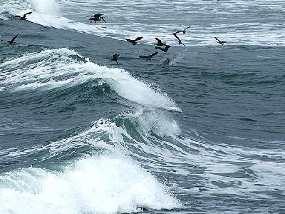 Photo Ocean Birds Ocean
