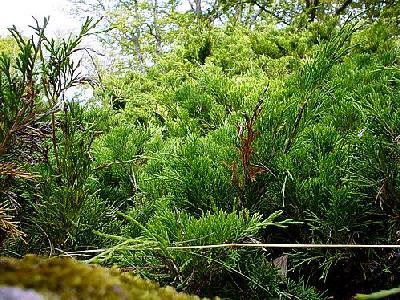 Photo Green Bush Plant