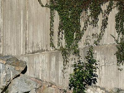 Photo Plants Climbing Concrete Wall 2 Plant