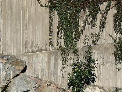 Photo Plants Climbing Concrete Wall 2 Plant