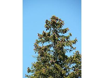 Photo Tree Top Plant