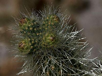 Photo Cactus Needles Plant