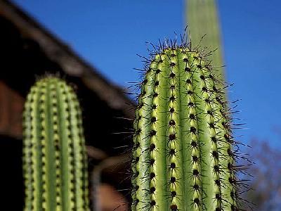Photo Cactus Needles 2 Plant