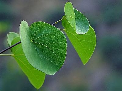 Photo Canyon Leaves Plant
