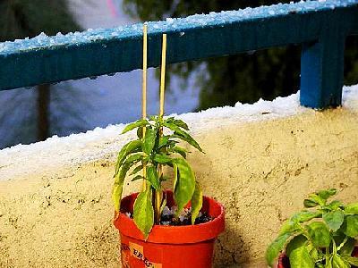 Photo Flowerpot Plant Plant
