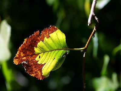Photo Leaf Plant