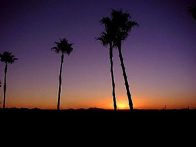 Photo Palm Trees And Sunrise Plant