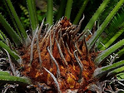 Photo Plant Plant