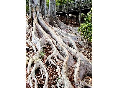 Photo Roots Plant