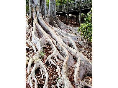 Photo Roots Plant