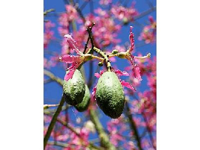 Photo Seed Pods Plant