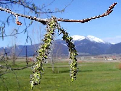 Photo Tree Plant