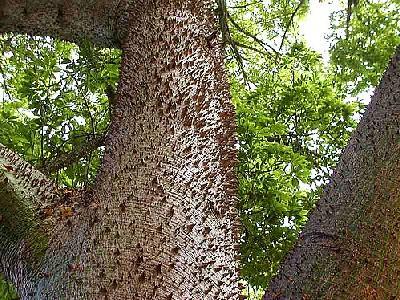 Photo Tree 2 Plant